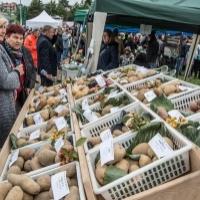 Święto Ziemniaka w Trzyciążu